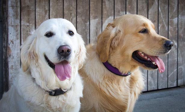 Sunny und Dave